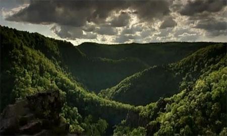 Forêt au Moyen-Âge